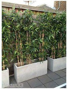Concrete Patios, Cement Patio, Casa Patio, Patio Wall, Diy Patio, Patio Ideas, Fence Ideas, Backyard Ideas, Privacy Landscaping