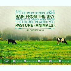 Quran  #islam #muslim #Allah #Quran #ProphetMuhammadpbuh #instagram #photo…