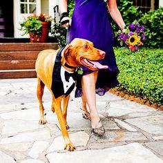 Dog Tuxedo Bow Tie Wedding by CamargoCreations on Etsy, $18.00