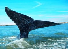 A whale of a tail!