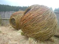 Willow weaving, basketry,live willow structures by Ruth Thompson in North Umbria