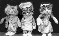 Vintage dressed cats Boy, Baker, Girl