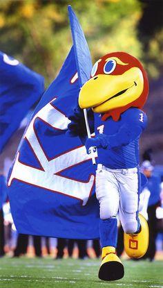 Kansas University mascot and flag