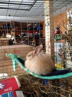 YumYum seems to be enjoying her corner hammock. Bunny Cages, Rabbit Cages, Rabbit Toys, Pet Rabbit, Rabbit Treats, Diy Bunny Toys, Rabbit Enclosure, Bunny Hutch, Indoor Rabbit