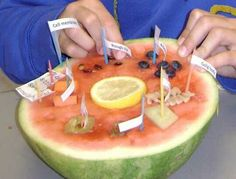 Kaitlyn wants to make her project using a watermelon . . . . . . .   Plant and animal cell projects