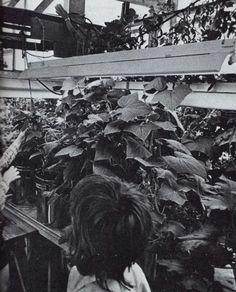 Greenhouse Gardening, Lane Publishing Co.  1976