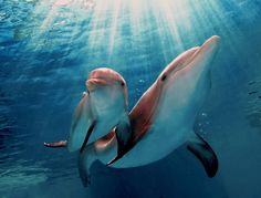 """Winter & Hope, the stars of """"Dolphin Tale 2"""""""