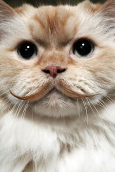 The Feline Flavor Saver | 15 Most Inspiring Moustaches In The Animal Kingdom