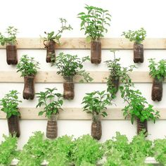 Fence Plants, Patio Plants, Outdoor Plants, Wall Plant Hanger, Hanging Plant Wall, Plants For Hanging Baskets, Hanging Herbs, Diy Planters, Garden Planters