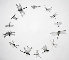 ♈ Dragonfly Versailles ♈ dragonflies in art, photography, jewelry, crafts, home & garden decor - Jane Eppel Circumnavigate Dragonfly Etching Dragonfly Art, Dragonfly Tattoo, Dragonfly Meaning, Tinta Tattoo, I Tattoo, Coraline Jones, Illustration Botanique, Art Plastique, Body Art