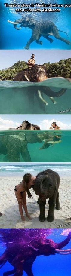 Swimming with elephants. It's a thing.