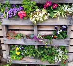Susan's Flower Pallet Susan's garden, succulents, hanging flowers, flower, arrangement, murphyfrog, repurpose, container gardening, vertical garden, colorful bloom