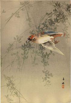 Bird in Flight by Kako Tsuji
