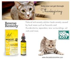 Rescue Remedy - help your cat stay calm during the holidays. www.thecatdoctoronline.com