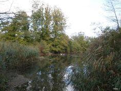 Bouleaux et fusain, forêt et réserve naturelle d'Offendorf (Bas-Rhin)