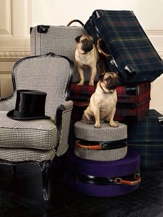 Luxury Accessories pugs