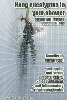 It may sound strange to place a plant in your shower, but this trick may have you feeling #StressFree. Hang #eucalyptus nearby your shower, or purchase some eucalyptus oil drops to bring clarity to your day.