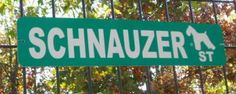 How awesome to live in this street! I'd need to live on corner Scottie and Schnauzer. Black Schnauzer, Giant Schnauzer, Schnauzer Puppy, Miniature Schnauzer, I Love Dogs, Puppy Love, Schnauzers, Pet Style, Family Dogs