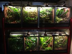 A wall of naturalistic chameleon cages, housing F. lateralis.