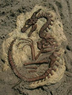 Recycle Reuse Renew Mother Earth Projects-How to make a fossil. Dragon Fossil, Dinosaur Fossils, Dragon Art, Dragon Garden, Art Plastique, Mythical Creatures, Dragons, Mother Earth, Archaeology