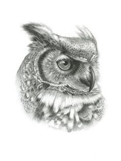 Drawn owl sketch - pin to your gallery. Explore what was found for the drawn owl sketch Owl Tattoo Drawings, Bird Drawings, Colorful Drawings, Animal Drawings, Tattoo Bird, Owl Photos, Owl Pictures, Lechuza Tattoo, Realistic Owl Tattoo