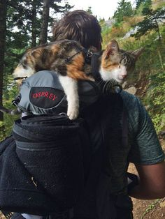Meet Honey Bee, The Blind Rescue Cat That Loves To Hike Honey Bee resting during hike