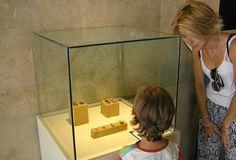 El Museo Paleontológico de Elche (MUPE) ha recuperado más restos de la campaña de excavación llevada a cabo dentro del Proyecto Paldes,…