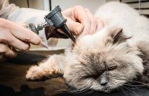 Plano preventivo de saúde animal - prolonga a saúde do seu pet!