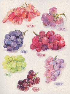 葡萄与秋天-林弄人_葡萄,水彩,秋天_涂...@英俊知心的十三采集到食物图(228图)_花瓣
