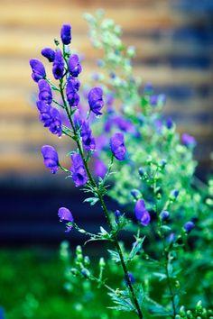 Усадьба Грибаново. Россия. фото: Ирина Майсова #flowers, #wildflowers, #bouquetflowers, #nature, #ecology,#photo #photoirinamaysova #flowers