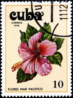 CUBA - CIRCA 1978 A Postage Stamp Shows Flowers of the Pacific Ocean, circa 1978 Stock Photo