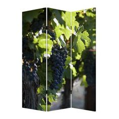 """Screen Gems 72"""" X 48"""" Wine Country 3 Panel Room Divider"""