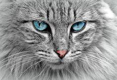 Tu gato, ese ser que te queda mirando cuando sales a la mañana y, en contadas ocasiones, te recibe a la tarde. Dicen que los perros tienen amos y los gatos esclavos, pero es difícil saber qué se esconde tras su felino cerebro.¿IMAGINAS QUÉ PIENSA TU GATO SOBRE TI?Bueno, se ...