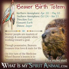 Is Beaver your Birth Totem? Read the in depth description in my Native American Zodiac & Astrology series! Learn Beaver's personality, compatibility, & more! Native American Zodiac Signs, Native American Animals, Native American Symbols, American Indians, Spirit Animal Totem, Animal Spirit Guides, Animal Meanings, Animal Symbolism, Animal Espiritual