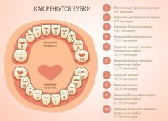 Baby Planning, Baby Health, Pregnancy, Medicine, How To Plan, Children, Teeth, Bebe, Young Children