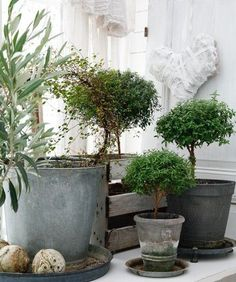 Indoor garden, topiary and zinc Indoor Garden, Garden Pots, Indoor Plants, Outdoor Gardens, Home And Garden, Potted Garden, Potted Trees, Modern Gardens, Japanese Gardens