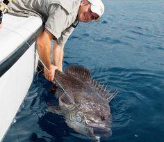 Gulf of Mexico overnight fishing
