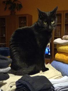 Čertík černý kocourek black cat