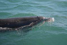 dauphins mer iroise conquet