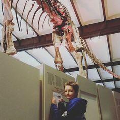 Op ontdekking in #museumvoornatuurwetenschappen #bruxelles #brussel #stadsklas #dinos (evarubens, Instagram)