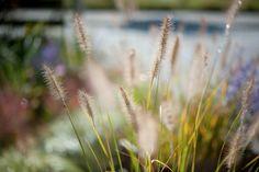 Clevere Pflanzenkombinationen  mit Ziergräsern und Dauerblühern - pflegeleicht - winterhart - wintergrün - wenig giessen - kein Düngen - mehrjährig - Gärten für Anfänger