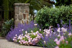 Cottage garden styles can be achieved with the planting of free-flowing, abundant flowering annuals and perennials. Here we have combined the vibrant floral blues/purples of Catmint 'Walker's Low' (Nepeta x faassenii) with the soft pink tones of Evening Primrose Pink (Oenothera speciosa 'Heronswood Pink').