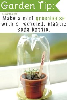 Get your seedlings off to a good start with their very own little greenhouse…
