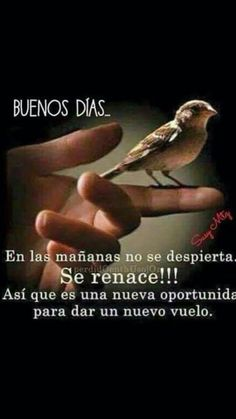 Buenos Dias Para Enviar- - Int Tutorial and Ideas Morning Quotes For Him, Good Morning Friends, Good Morning Good Night, Faith Quotes, Life Quotes, Good Morning In Spanish, Christian Quotes Images, Jesus Adrian Romero, I Love You God