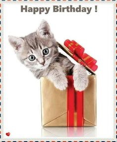Little kitty in the box- Happy Birthday pictures, images, pics.
