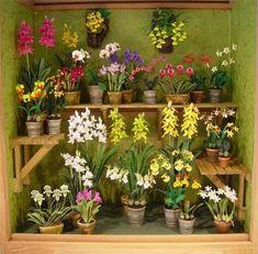 ♡ orchids