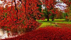 Autumn - Yahoo Image Search Results
