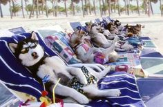 Que pensarías si te digo que las multas a perros en las playas son una estafa? no te lo pierdas http://www.nttviajes.com/perros-en-las-playas/
