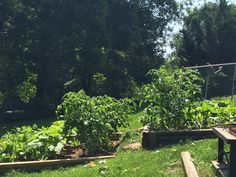 2015 - Upper plots, close to porch for easy maintenance. Added 2nd this year. Contains cucumbers, peppers, Bush green beans, tomatoes, squash, giant marigolds & zinnias.