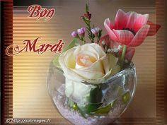 mardi8.jpg (600×450)